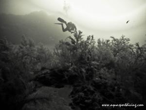 corail noir