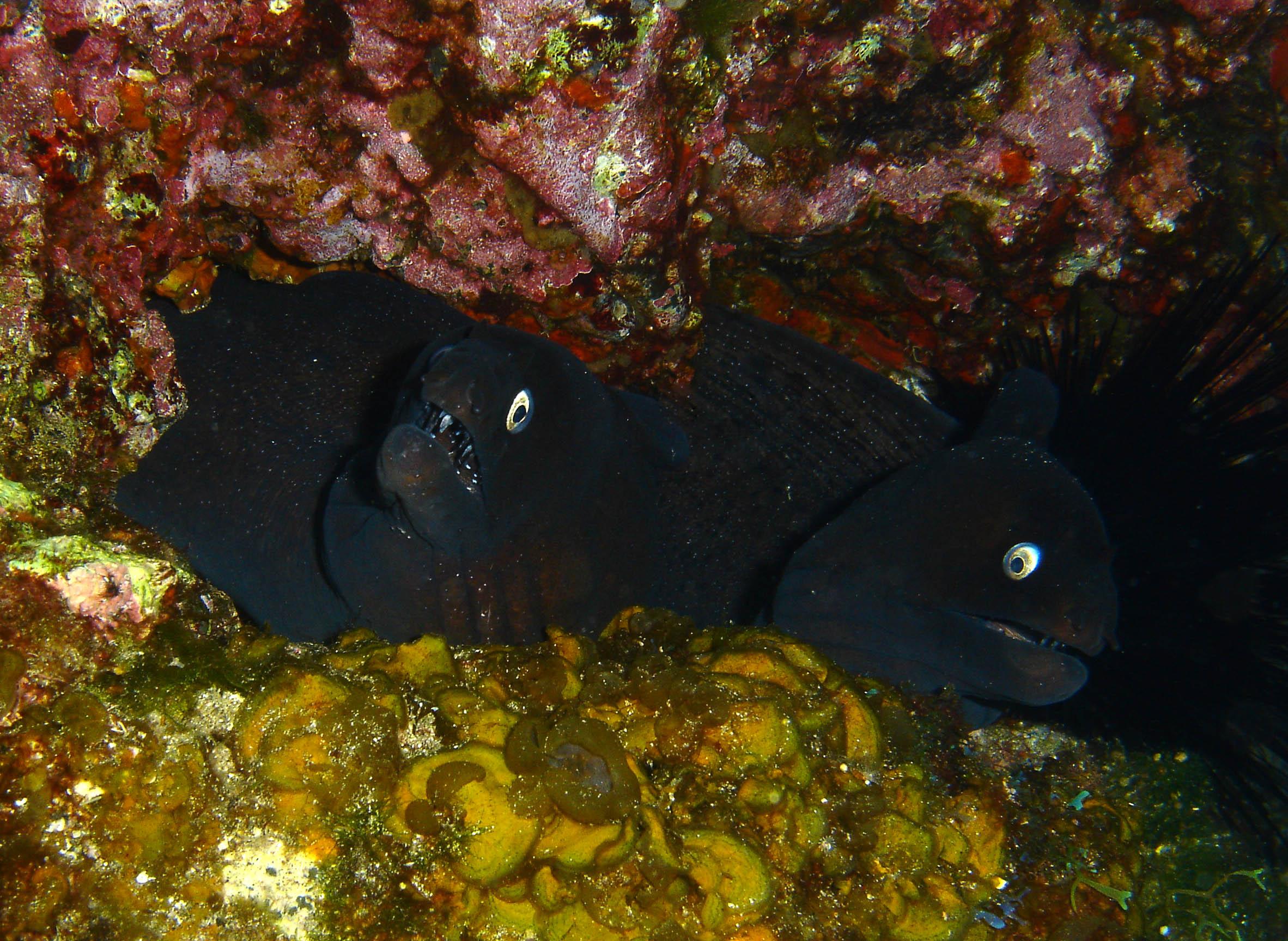 2 mooray eels.jpg