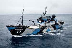 sea-shepherd-vessel-steve-irwin-heads-out-to-intercept-japanese-whalers