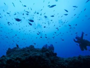 Specialité Profonde Padi plongée Lanzarote